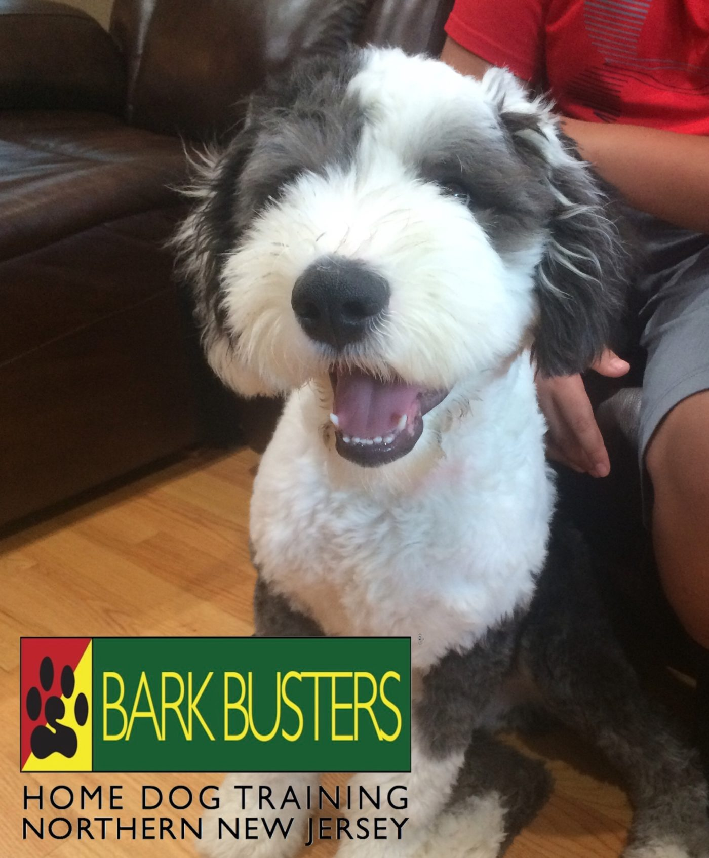 #BarkBusters #dogtraining #dogtrainerNorthernNewJersey #speakdog #dogs #puppies #HappyDogsHappyFamilies #sheepdog #OldEnglishSheepdog #dogsOfBarkBusters #Rutherford