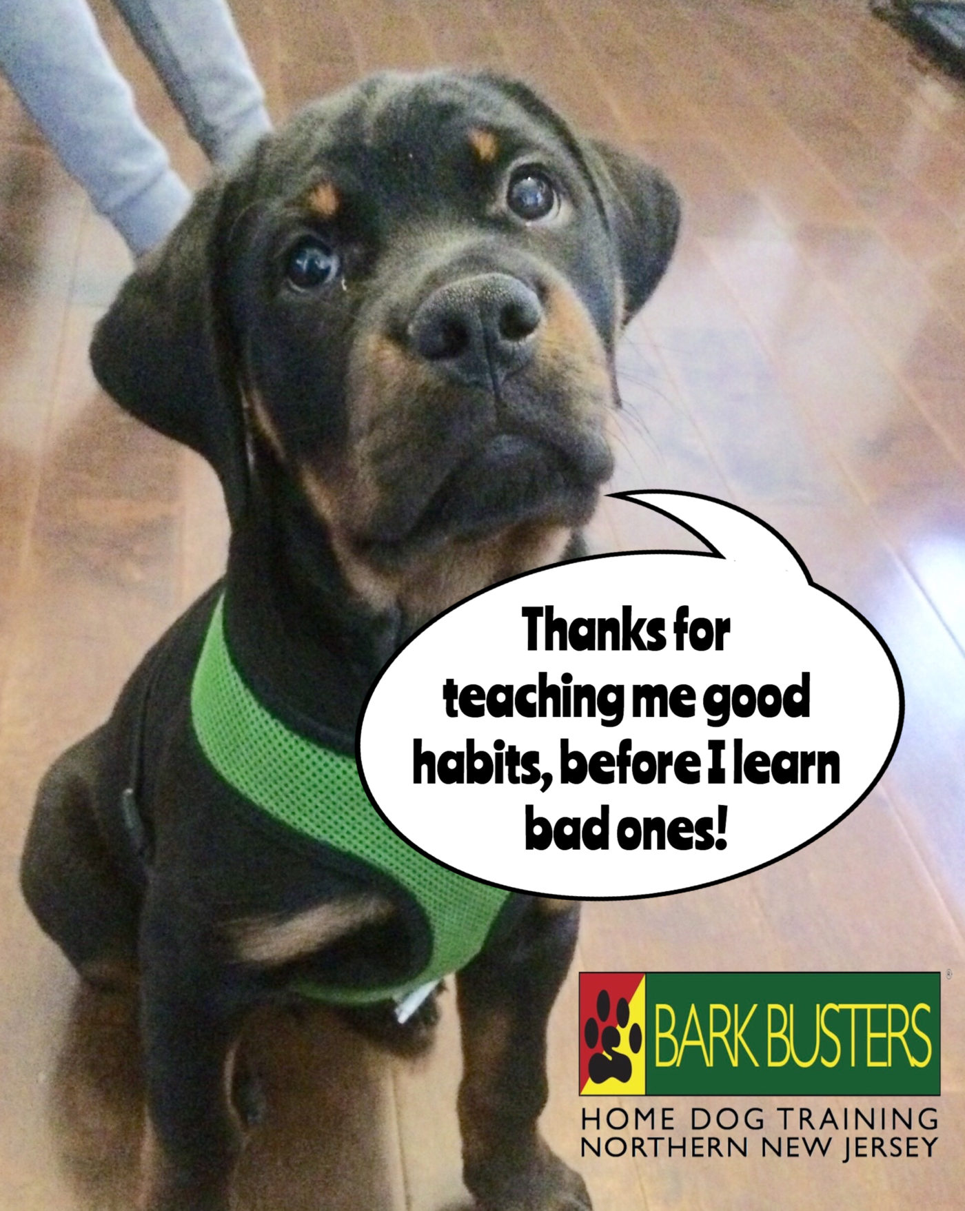 #BarkBusters #dogtraining #dogtrainerNorthernNewJersey #speakdog #dogs #puppies #HappyDogsHappyFamilies #Rottweiler #dogsOfBarkBusters #Bogota