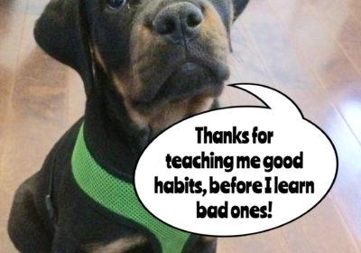 #BarkBusters #dogtraining #dogtrainerNorthernNewJersey #speakdog #dogs #puppies #HappyDogsHappyFamilies #Rottweiler #dogsOfBarkBusters #Bogota
