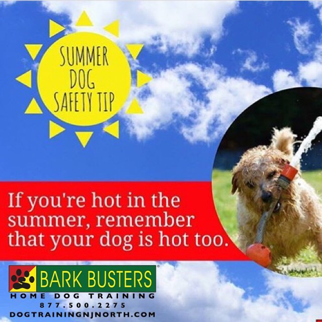 #NationalHotDogMonth #BarkBusters #dogtraining #speakdog #dogs #puppies #HappyDogsHappyFamilies #dogsOfBarkBusters #dogTrainerNorthernNewJersey #hotdog #summer #Ridgewood