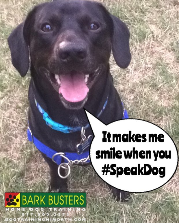#BarkBusters #mixedbreed #mutt #mutts of Instagram #dogtrainer #dogtrainingNorthernNewJersey #speakdog #dogs #puppies #HappyDogsHappyFamilies #dogsOfBarkBusters #HasbrouckHeights