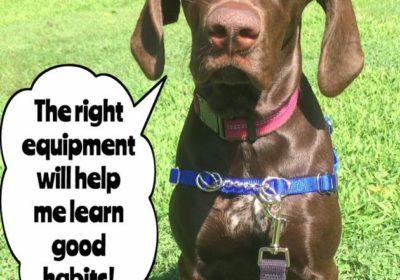 #GermanShorthairedPointer #puppy #WaggWalker #BarkBusters #dogtraining #dogtrainerNorthernNewJersey #speakdog #dogs #puppies #HappyDogsHappyFamilies #dogsOfBarkBusters #WoodcliffLake