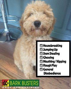 #Labradoodle #BarkBusters #dogtraining #dogtrainerNorthernNewJersey #speakdog #dogs #puppies #HappyDogsHappyFamilies #LabradoodlesOfInstagram #dogsOfBarkBusters #GlenRock