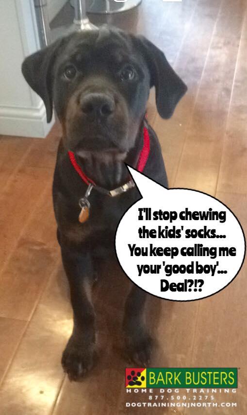 #PositiveReinforcement #dogs #TreatFree #ForceFree #BarkBusters #dogtraining #dogtrainerNorthernNewJersey #speakdog #puppies #HappyDogsHappyFamilies #Rottweiler #dogsOfBarkBusters #Bogota
