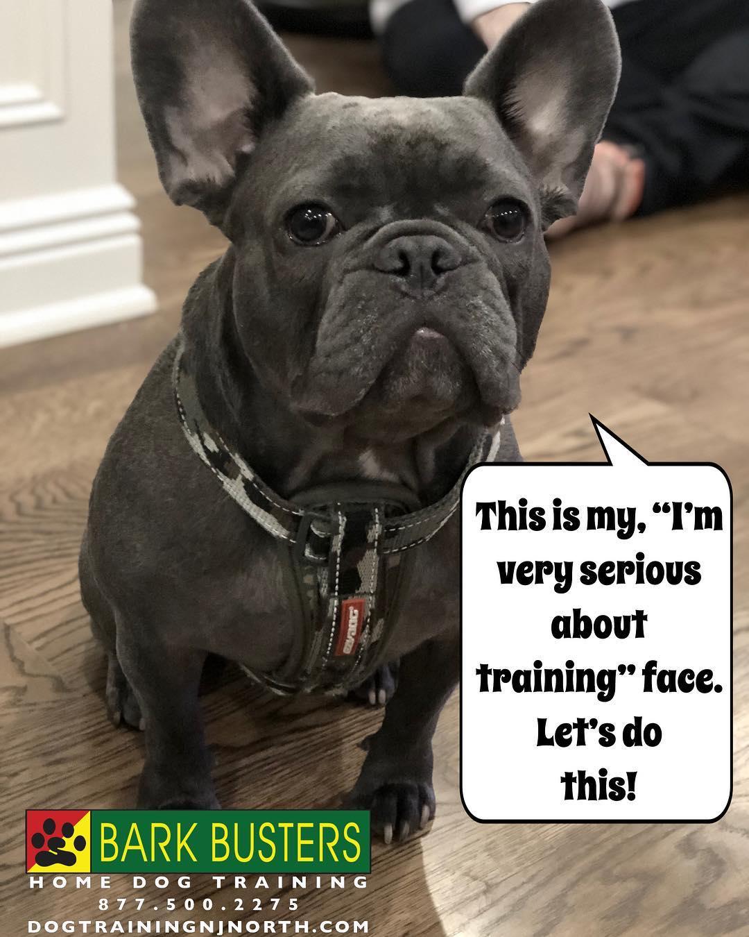 #BarkBusters #dogtraining #dogtrainerNorthernNewJersey #speakdog #dogs #puppies #HappyDogsHappyFamilies #FrenchBulldog #dogsOfBarkBusters #HoHoKus