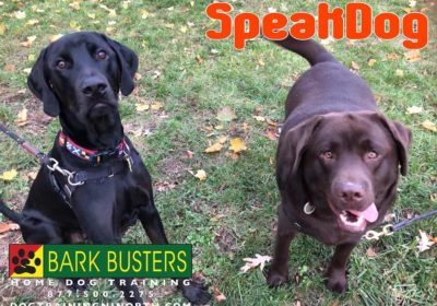 #BarkBusters #dogtrainerNorthernNewJersey #speakdog #dogs #puppies #HappyDogsHappyFamilies #MixedBreed #LabradorRetriever #dogsOfBarkBusters #GlenRock #dogtraining