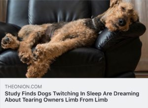 #BarkBusters #dogtrainer #dogtrainingNorthernNewJersey #speakdog #dogs #puppies #HappyDogsHappyFamilies #Terrier #dogsOfBarkBusters #BestDogTrainerNorthernNJ #Paramus #Ridgewood #Hoboken #Wyckoff