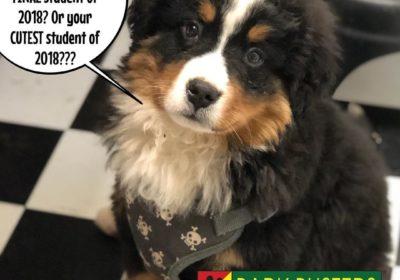 #BerneseMountainDog #puppy #DogTraining #2018 #BarkBusters #dogtrainerNorthernNewJersey #speakdog #dogs #puppies #HappyDogsHappyFamilies #dogsOfBarkBusters #FairLawn #Paramus #Ridgewood #Englewood #Hoboken