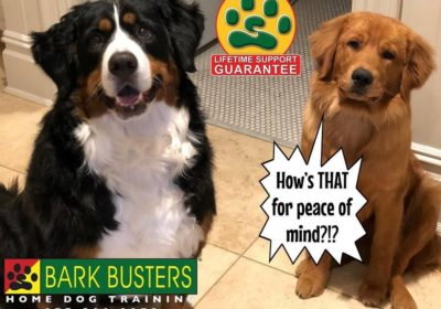 #bernesemountaindog #goldenretriever #dogtraining #barkbusters #lifetimesupportguarantee #BarkBusters #dogtrainer #dogtrainingNorthernNewJersey #speakdog #dogs #puppies #HappyDogsHappyFamilies #dogsOfBarkBusters #Wyckoff #Paramus #Ridgewood #GlenRock #Hoboken #WoodcliffLake #Englewood #Closter