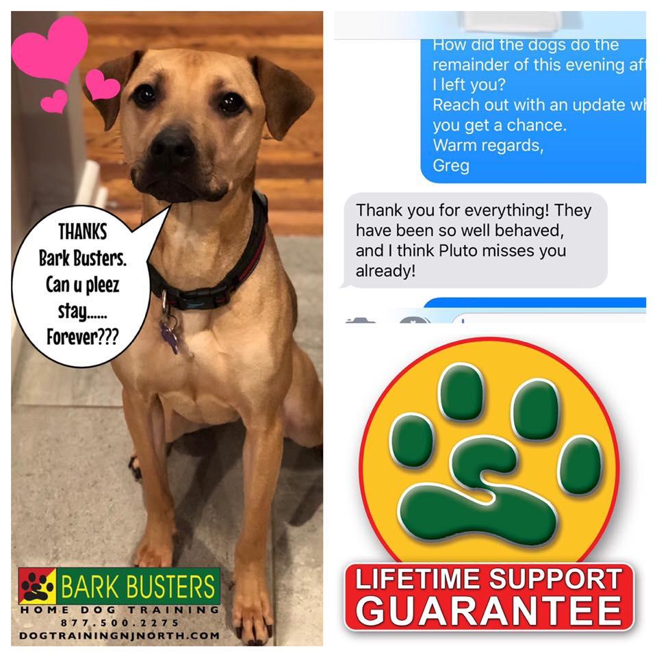 #crush #BarkBusters #dogtraining #dogtrainerNorthernNewJersey #speakdog #dogs #puppies #HappyDogsHappyFamilies #MixedBreed #Mutt #Rescue #dogsOfBarkBusters #Hillsdale #Paramus #Ridgewood #Hoboken #Englewood #Edgewater