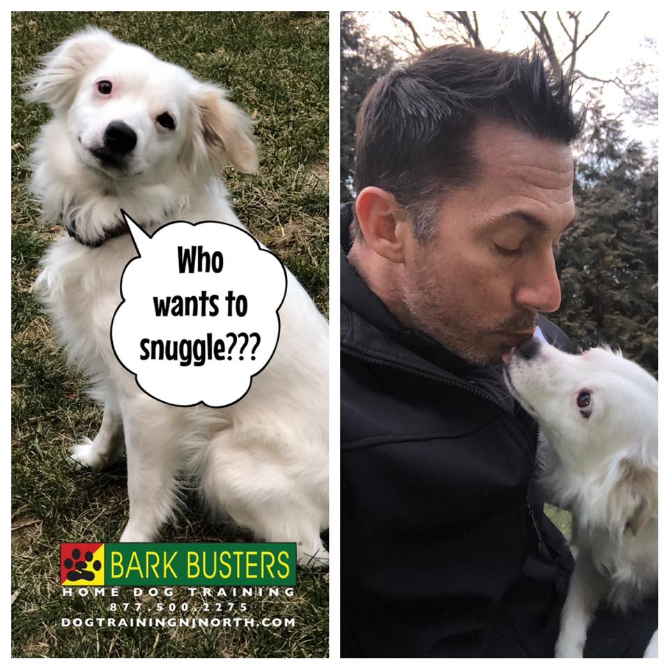 #snuggly #rescued #mixedbreed #dog #affectionate #LOVE #dogtrainer #BarkBusters #dogtraining #dogtrainerNorthernNewJersey #speakdog #dogs #puppies #HappyDogsHappyFamilies #dogsOfBarkBusters #HoHoKus #Ridgewood #Paramus #Edgewater #Hoboken #dogkisser