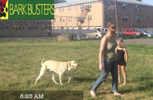 Bark Busters of NORTHERN NEW JERSEY Helps You & Your Pet Enjoy 'National Walking Your Dog Day'