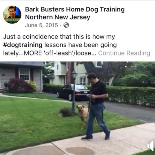 National Walking Your Dog Day w/ Bark Busters of NORTHERN NEW JERSEY
