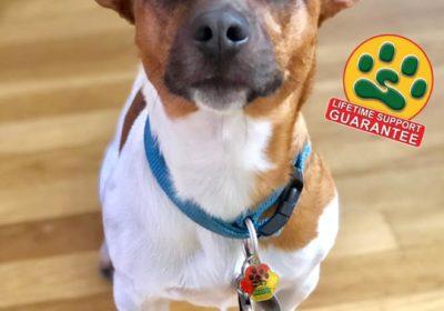 #dogtraining #LifetimeSupportGuarantee #BarkBusters #dogtrainer #dogtrainerNorthernNewJersey #speakdog #dogs #puppies #HappyDogsHappyFamilies #dogsOfBarkBusters #Ridgewood #paramus #westwood #hoboken #edgewater #glenrock #JackRussellTerrier #SeparationAnxiety