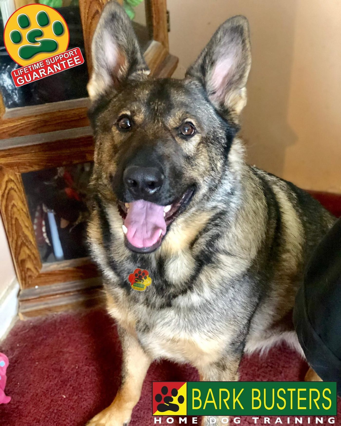#GermanShepherd #BarkBusters #dogtrainer #dogtraining #dogtrainingNorthernNewJersey #speakdog #dogs #puppies #HappyDogsHappyFamilies #dogsOfBarkBusters #paramus #ridgewood #oradell #closter #edgewater #englewood #demarest #haworth