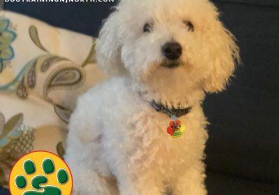 #dogtraining #LifetimeSupportGuarantee #BarkBusters #dogtrainer #dogtrainerNorthernNewJersey #speakdog #dogs #puppies #HappyDogsHappyFamilies #dogsOfBarkBusters #Ridgewood #paramus #westwood #hoboken #edgewater #westnewyork #bichonfrise
