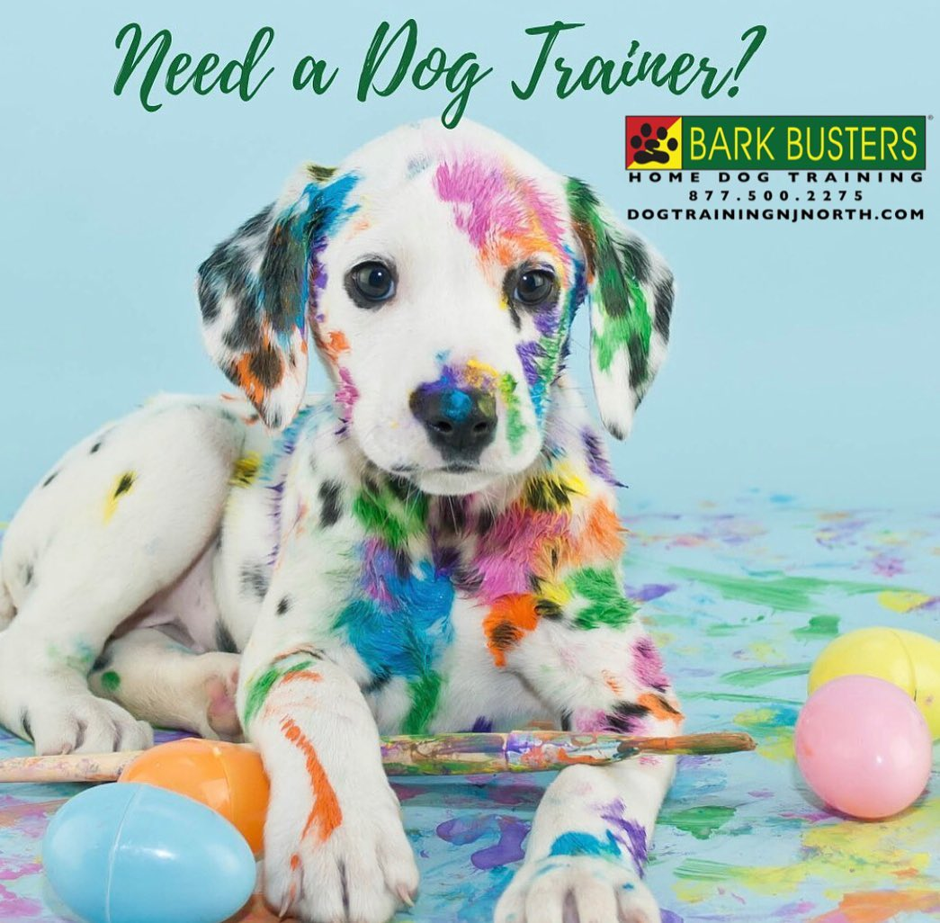 #BarkBusters #dogtraining #dogtrainerNorthernNewJersey #puppies #dogs #HappyDogsHappyFamilies #dogsOfBarkBusters #MidlandPark #Paramus #Ridgewood #Emerson #GlenRock #Edgewater #Hoboken #Demarest #bergencounty #bergencountydogs #bergencountydogtraining #videodogtraining #zoom #skype #facetime #lifetimesupportguarantee #socialdistancing #stayhome #quarantine #puppy
