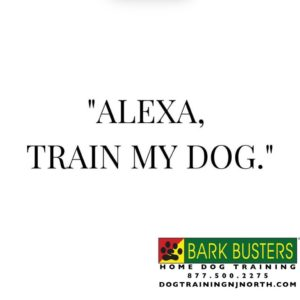 #socialdistancing #covid_19 #stayhome #Alexa #Amazon #BarkBusters #dogtrainer #dogs #puppies #puppytraining #HappyDogsHappyFamilies #dogsOfBarkBusters #NewMilford #Paramus #Ridgewood #Bergenfield #Hoboken #GlenRock #Englewood #Guttenberg #housebreaking #chewing #jumpingup #barking #bergencounty #bergencountydogtrainer #zoommeeting #facetime #skype #dogtrainingnorthernnewjersey #lifetimesupportguarantee