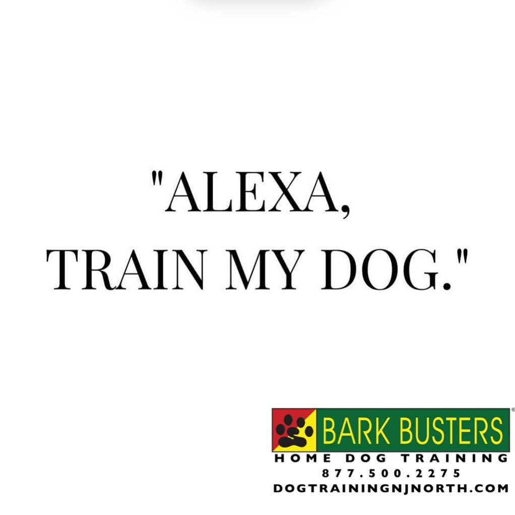 #socialdistancing #covid_19 #stayhome #Alexa #Amazon #BarkBusters #dogtrainer #dogs #puppies #puppytraining #HappyDogsHappyFamilies #dogsOfBarkBusters #NewMilford #Paramus #Ridgewood #Bergenfield #Hoboken #GlenRock #Englewood #Guttenberg #housebreaking #chewing #jumpingup #barking #bergencounty #bergencountydogtrainer #zoommeeting #facetime #skype #dogtrainingnorthernnewjersey #lifetimesupportguarantee