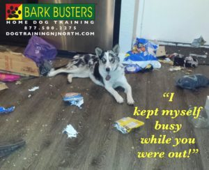 #Quarantined #socialdistancing #lifetimesupportguarantee #BarkBusters #dogtrainer #dogtrainingNorthernNewJersey #dogs #puppies #HappyDogsHappyFamilies #Wyckoff #Paramus #Ridgewood #GlenRock #Hoboken #Hackensack #Tenafly #Alpine #stayhome #stayathome #bergencounty #bergencountydogtrainer #zoom #facetime #skype #virtual #selfisolation #covid_19
