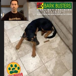 #BarkBusters #dogtraining #dogtrainerNorthernNewJersey #puppies #dogs #HappyDogsHappyFamilies #dogsOfBarkBusters #Westwood #Paramus #Ridgewood #Englewood #GlenRock #JerseyCity #Hoboken #hillsdale #bergencounty #bergencountydogs #bergencountydogtraining #videodogtraining #zoom #skype #facetime #lifetimesupportguarantee #stayhome #stayathome #socialdistancing #quarantine #covid_19 #coronavirus